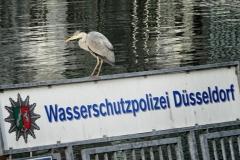 Düsseldorf-20