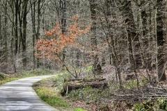 Radpilgerwege-Etappe-2-8