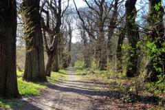 Tiergartenwald Kleve